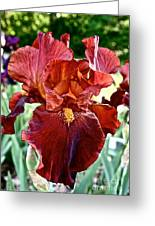 Red Iris Greeting Card