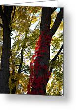 Red Ivy Climb Greeting Card
