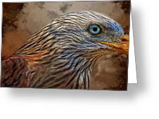 Red Kite - Featured In The Groups - Spectacular Artworks And Wildlife Greeting Card