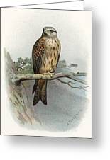 Red Kite, Historical Artwork Greeting Card