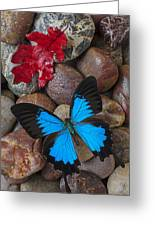 Red Leaf And Blue Butterfly Greeting Card