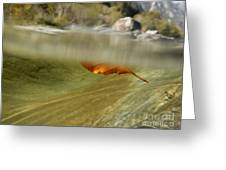 Red Leaf Floating Greeting Card