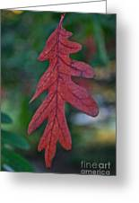 Red Leaf Hanging Greeting Card