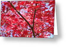 Red Leaves And Branch Greeting Card