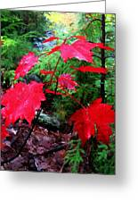 Red Leaves Greeting Card