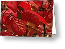 Red Light Greeting Card