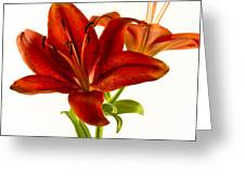 Red Lily Number One Square Greeting Card