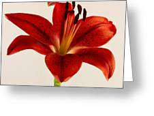 Red Lily Number Three Greeting Card