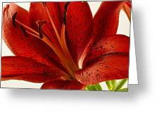 Red Lily Number Two Greeting Card