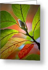 Red Magnolia Leaves With Bud Greeting Card