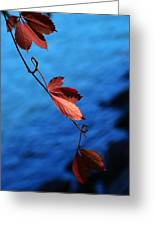 Red Maple Leaves Greeting Card by Paul Ge