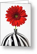 Red Mum In Striped Vase Greeting Card