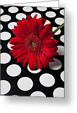 Red Mum With White Spots Greeting Card