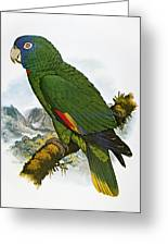 Red-necked Amazon Parrot Greeting Card