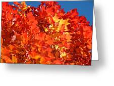 Red Orange Yellow Autumn Leaves Art Prints Vivid Bright Greeting Card