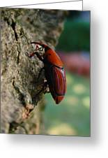 Red Palm Weevil Greeting Card