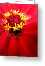 Red Passion Greeting Card by Cindy Wright