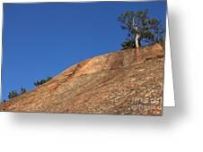 Red Pine Tree Greeting Card