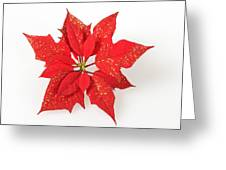 Red Poinsettia Flower Greeting Card