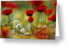 Red Poppies And Small Daisies Bloom Greeting Card