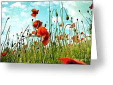 Red Poppy Flowers 03 Greeting Card
