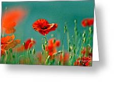 Red Poppy Flowers 06 Greeting Card