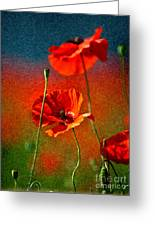 Red Poppy Flowers 08 Greeting Card