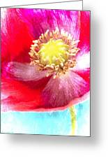 Red Poppy On Blue Greeting Card