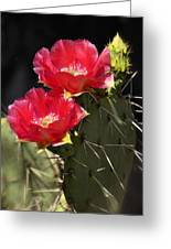 Red Prickly Pear Cactus  Greeting Card