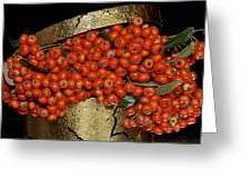 Red Pyracantha Berries Greeting Card