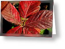 Red Quintete Greeting Card