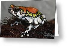 Red Rain Frog Greeting Card