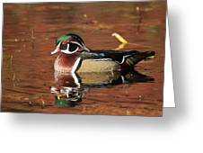 Red Reflection Of A Wood Duck Greeting Card