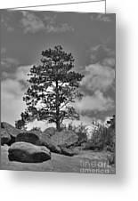 Red Rock Pine Greeting Card