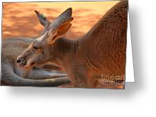 Red Roos Greeting Card