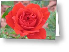 Red Rose 2  Greeting Card