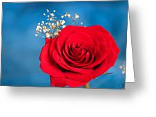 Red Rose And Baby Breath Greeting Card
