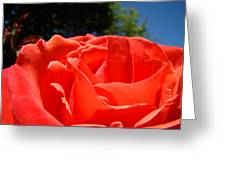 Red Rose Flower Bright Colorful Vivid Red Floral Rose Greeting Card