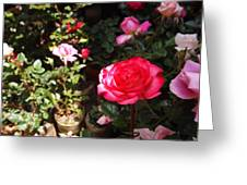 Red Rose In The Market Greeting Card