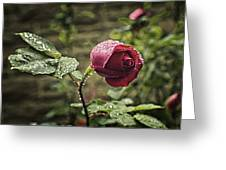 Red Rose In Water Drops Greeting Card