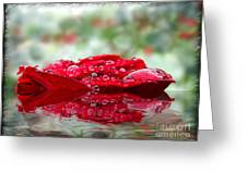 Red Rose Reflections Greeting Card