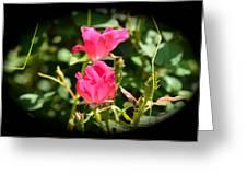 Red Rose Vignette Greeting Card