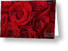 Red Roses And Water Drops Greeting Card