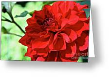 Red Ruby Dahlia Greeting Card