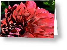 Red Rush Greeting Card