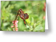 Red Saddlebag Dragonfly In The Marsh Greeting Card