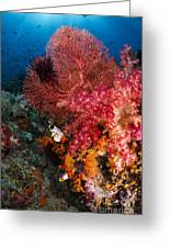 Red Sea Fan And Soft Coral In Raja Greeting Card