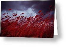 Red Sea Oats Blow In The Wind Greeting Card
