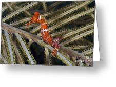 Red Seahorse On Caribbean Reef Greeting Card