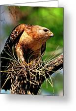 Red-shouldered Hawk With Breakfast Greeting Card